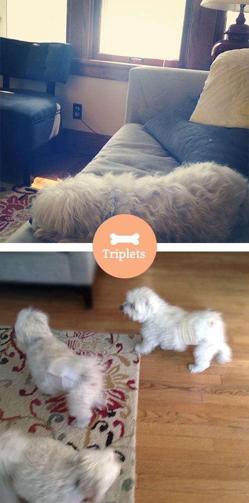 dogsitting pics